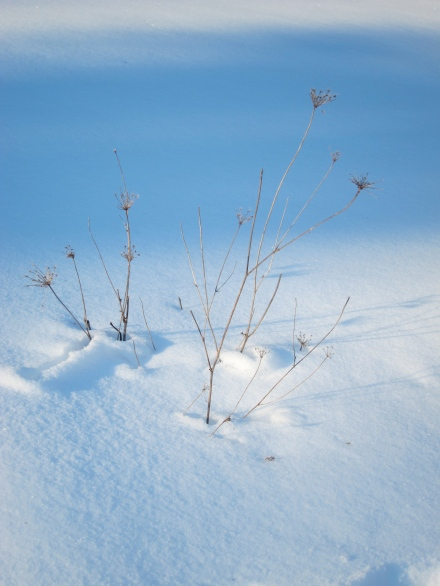 Twigs and blue snow